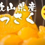 和歌山県産はっさく3kg 1,000円 送料無料 2箱同時購入で1箱分プレゼント 【楽天買うクーポン・RaCoupon】